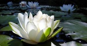 Technique-créative-fleur-de-lotus-750x400